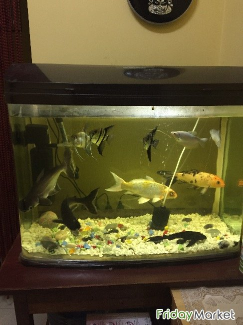 Fish Tank With 9 Fishes, Pump And Small Heater Muscat Oman